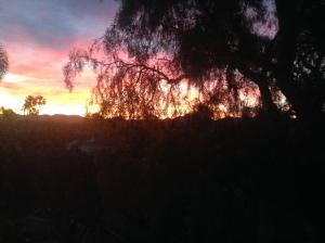 Sunrise from my backyard